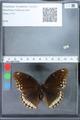 http://mczbase.mcz.harvard.edu/specimen_images/ent-lepidoptera/images/2010_03_01/IMG_033771.JPG