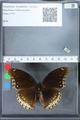 http://mczbase.mcz.harvard.edu/specimen_images/ent-lepidoptera/images/2010_03_01/IMG_033772.JPG