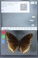 http://mczbase.mcz.harvard.edu/specimen_images/ent-lepidoptera/images/2010_03_01/IMG_033773.JPG