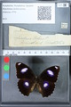 http://mczbase.mcz.harvard.edu/specimen_images/ent-lepidoptera/images/2010_03_01/IMG_033777.JPG