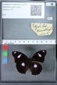 http://mczbase.mcz.harvard.edu/specimen_images/ent-lepidoptera/images/2010_03_01/IMG_033781.JPG