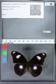 http://mczbase.mcz.harvard.edu/specimen_images/ent-lepidoptera/images/2010_03_02/IMG_033790.JPG