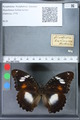 http://mczbase.mcz.harvard.edu/specimen_images/ent-lepidoptera/images/2010_03_02/IMG_033834.JPG