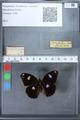 http://mczbase.mcz.harvard.edu/specimen_images/ent-lepidoptera/images/2010_03_02/IMG_034266.JPG