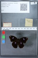 http://mczbase.mcz.harvard.edu/specimen_images/ent-lepidoptera/images/2010_03_02/IMG_034267.JPG