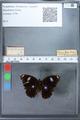 http://mczbase.mcz.harvard.edu/specimen_images/ent-lepidoptera/images/2010_03_02/IMG_034269.JPG