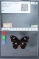 http://mczbase.mcz.harvard.edu/specimen_images/ent-lepidoptera/images/2010_03_02/IMG_034278.JPG