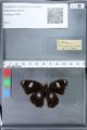 http://mczbase.mcz.harvard.edu/specimen_images/ent-lepidoptera/images/2010_03_05/IMG_034787.JPG