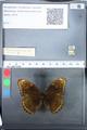 http://mczbase.mcz.harvard.edu/specimen_images/ent-lepidoptera/images/2010_03_05/IMG_034796.JPG
