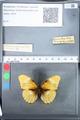 http://mczbase.mcz.harvard.edu/specimen_images/ent-lepidoptera/images/2010_03_05/IMG_034799.JPG