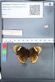 http://mczbase.mcz.harvard.edu/specimen_images/ent-lepidoptera/images/2010_03_05/IMG_034803.JPG