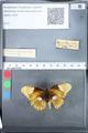 http://mczbase.mcz.harvard.edu/specimen_images/ent-lepidoptera/images/2010_03_05/IMG_034806.JPG