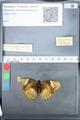 http://mczbase.mcz.harvard.edu/specimen_images/ent-lepidoptera/images/2010_03_05/IMG_034807.JPG