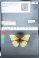 http://mczbase.mcz.harvard.edu/specimen_images/ent-lepidoptera/images/2010_03_05/IMG_034808.JPG