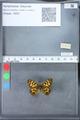 http://mczbase.mcz.harvard.edu/specimen_images/ent-lepidoptera/images/2010_03_09/IMG_035290.JPG