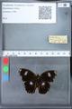 http://mczbase.mcz.harvard.edu/specimen_images/ent-lepidoptera/images/2010_03_09/IMG_035301.JPG