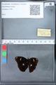 http://mczbase.mcz.harvard.edu/specimen_images/ent-lepidoptera/images/2010_03_09/IMG_035309.JPG