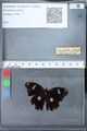http://mczbase.mcz.harvard.edu/specimen_images/ent-lepidoptera/images/2010_03_09/IMG_035310.JPG