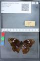 http://mczbase.mcz.harvard.edu/specimen_images/ent-lepidoptera/images/2010_03_09/IMG_035313.JPG