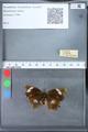 http://mczbase.mcz.harvard.edu/specimen_images/ent-lepidoptera/images/2010_03_09/IMG_035322.JPG