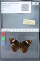http://mczbase.mcz.harvard.edu/specimen_images/ent-lepidoptera/images/2010_03_09/IMG_035325.JPG