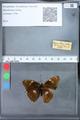 http://mczbase.mcz.harvard.edu/specimen_images/ent-lepidoptera/images/2010_03_09/IMG_035329.JPG