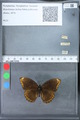 http://mczbase.mcz.harvard.edu/specimen_images/ent-lepidoptera/images/2010_03_09/IMG_035339.JPG