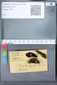 http://mczbase.mcz.harvard.edu/specimen_images/ent-lepidoptera/images/2010_03_09/IMG_035351.JPG