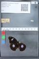 http://mczbase.mcz.harvard.edu/specimen_images/ent-lepidoptera/images/2010_03_12/IMG_035938.JPG