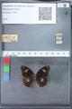 http://mczbase.mcz.harvard.edu/specimen_images/ent-lepidoptera/images/2010_03_12/IMG_035940.JPG