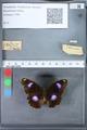 http://mczbase.mcz.harvard.edu/specimen_images/ent-lepidoptera/images/2010_03_12/IMG_035941.JPG
