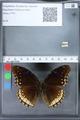 http://mczbase.mcz.harvard.edu/specimen_images/ent-lepidoptera/images/2010_03_15/IMG_035964.JPG