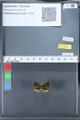 http://mczbase.mcz.harvard.edu/specimen_images/ent-lepidoptera/images/2010_03_26/IMG_036860.JPG