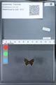 http://mczbase.mcz.harvard.edu/specimen_images/ent-lepidoptera/images/2010_03_26/IMG_036863.JPG