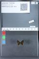http://mczbase.mcz.harvard.edu/specimen_images/ent-lepidoptera/images/2010_03_26/IMG_036865.JPG