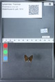 http://mczbase.mcz.harvard.edu/specimen_images/ent-lepidoptera/images/2010_03_26/IMG_036866.JPG
