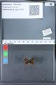 http://mczbase.mcz.harvard.edu/specimen_images/ent-lepidoptera/images/2010_03_26/IMG_036870.JPG