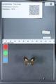 http://mczbase.mcz.harvard.edu/specimen_images/ent-lepidoptera/images/2010_03_26/IMG_036879.JPG