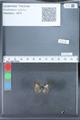 http://mczbase.mcz.harvard.edu/specimen_images/ent-lepidoptera/images/2010_03_26/IMG_036889.JPG
