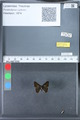 http://mczbase.mcz.harvard.edu/specimen_images/ent-lepidoptera/images/2010_03_26/IMG_036890.JPG