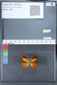 http://mczbase.mcz.harvard.edu/specimen_images/ent-lepidoptera/images/2010_03_26/IMG_036915.JPG