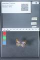 http://mczbase.mcz.harvard.edu/specimen_images/ent-lepidoptera/images/2010_03_29/IMG_037153.JPG
