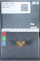http://mczbase.mcz.harvard.edu/specimen_images/ent-lepidoptera/images/2010_03_30/IMG_037597.JPG