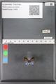 http://mczbase.mcz.harvard.edu/specimen_images/ent-lepidoptera/images/2010_04_01/IMG_038017.JPG