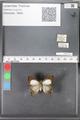 http://mczbase.mcz.harvard.edu/specimen_images/ent-lepidoptera/images/2010_04_13/IMG_040216.JPG