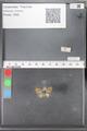 http://mczbase.mcz.harvard.edu/specimen_images/ent-lepidoptera/images/2010_04_13/IMG_040259.JPG