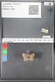 http://mczbase.mcz.harvard.edu/specimen_images/ent-lepidoptera/images/2010_04_13/IMG_040264.JPG