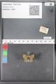 http://mczbase.mcz.harvard.edu/specimen_images/ent-lepidoptera/images/2010_04_13/IMG_040268.JPG