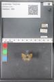 http://mczbase.mcz.harvard.edu/specimen_images/ent-lepidoptera/images/2010_04_13/IMG_040275.JPG