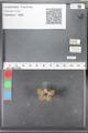 http://mczbase.mcz.harvard.edu/specimen_images/ent-lepidoptera/images/2010_04_13/IMG_040276.JPG